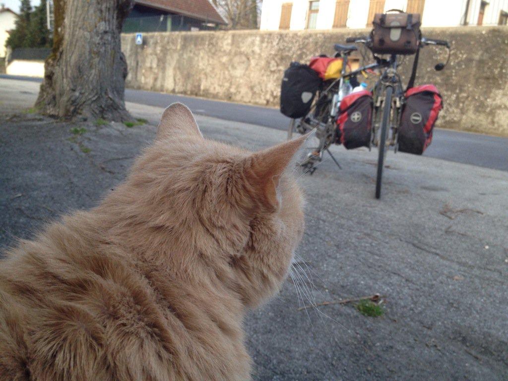 Katze in Chessenaz